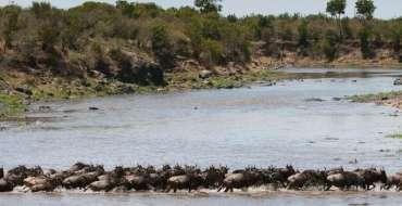migration-river-crossing-tanzania-safari