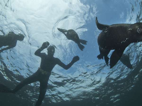 Snorkeling with seals, Hout Bay